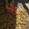 冬の足音 落葉