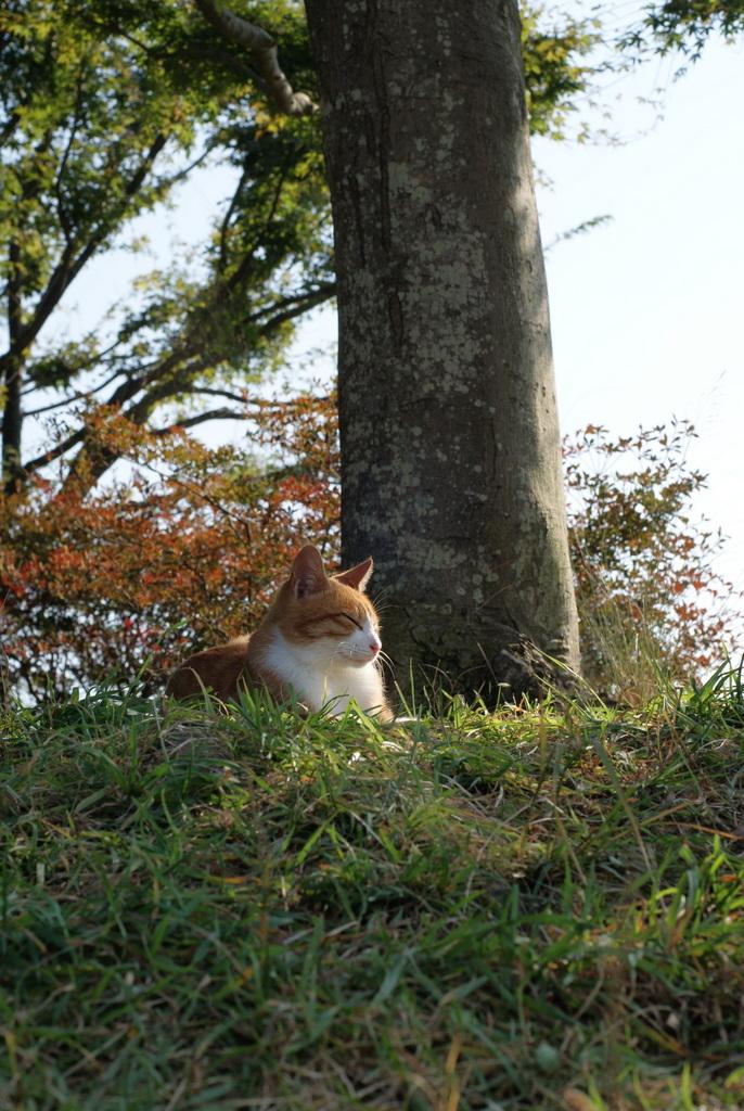 陽射しと猫