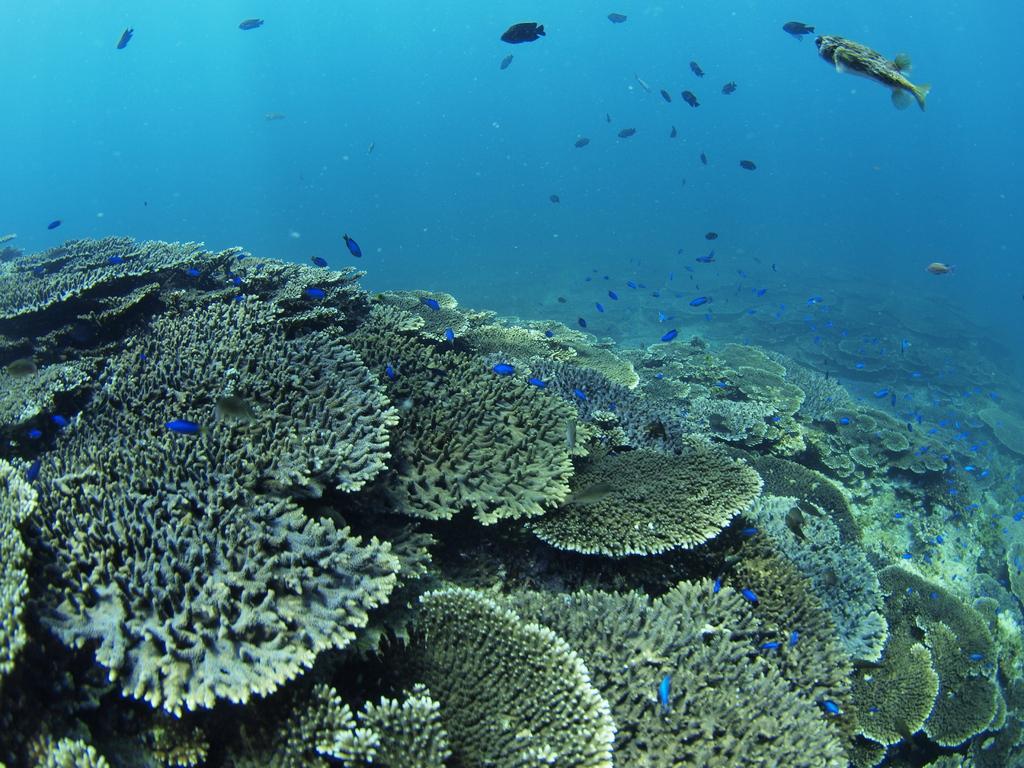 どこまでも続く珊瑚礁