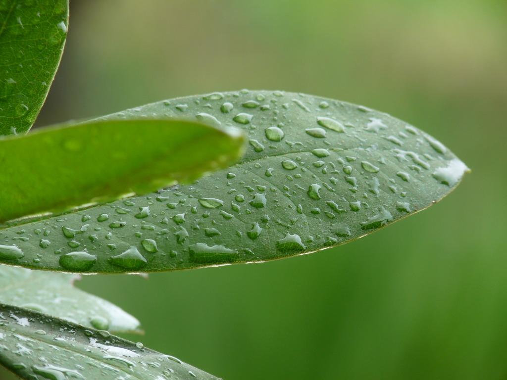 梅雨明けはまだ…