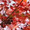 秋満載の中で。