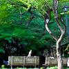 憩いの人と木