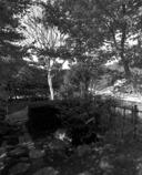 金秋の日本庭園
