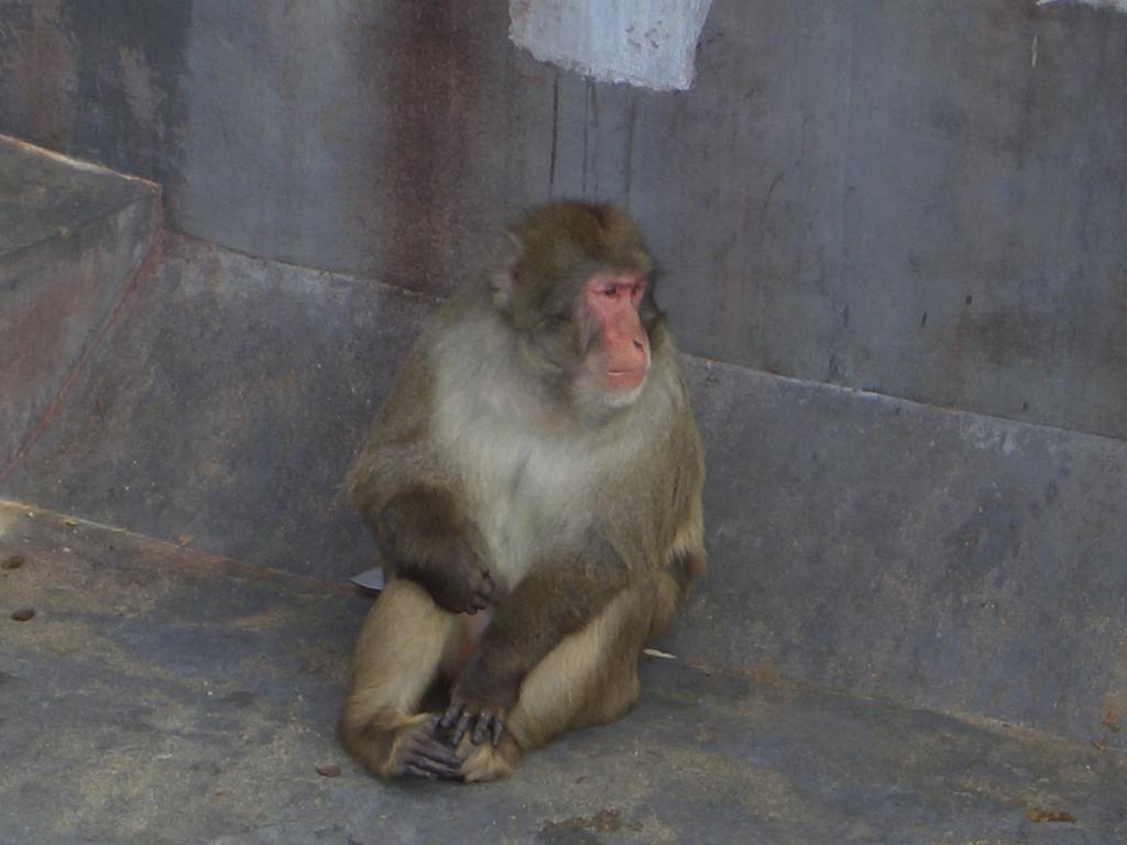 熱帯植物園サル