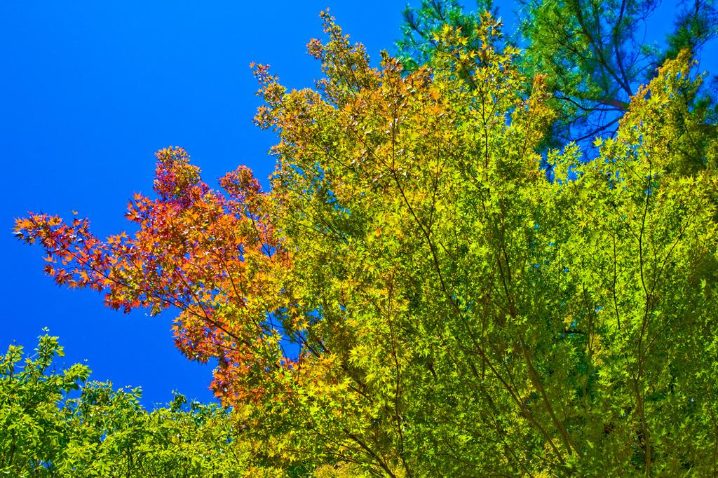 原色の景観