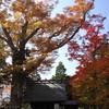 parque okaya59
