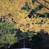 秋の色.2