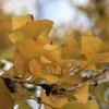 秋の色.1