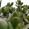 サボテンみたいな植物