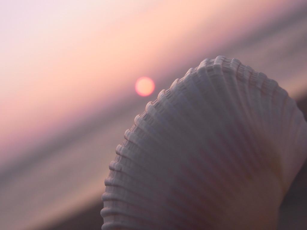 夕日と貝殻