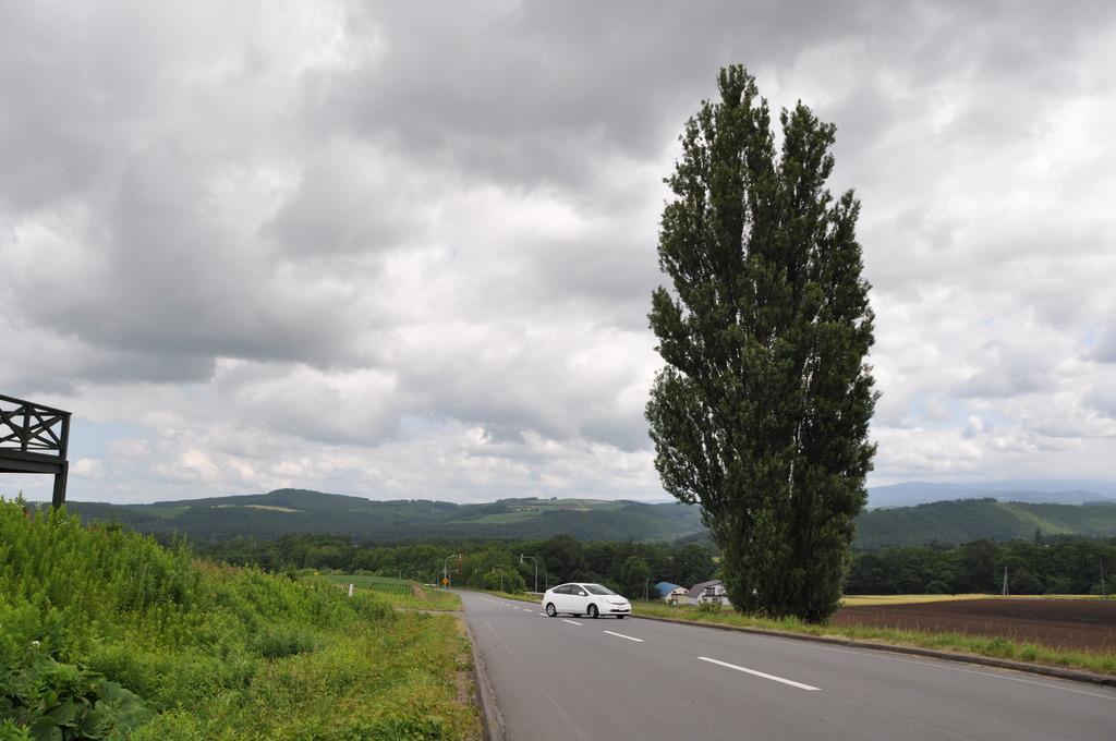 ケント・メリーの木