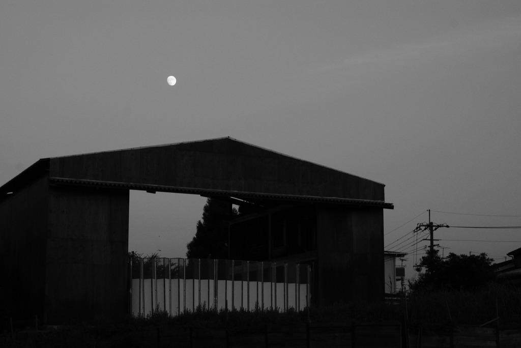 月夜に棲むいきものがいると云う。