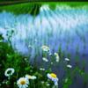 田園に咲く花