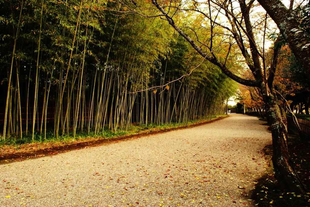 晩秋の竹道
