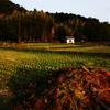 秋も終わる田園を行く