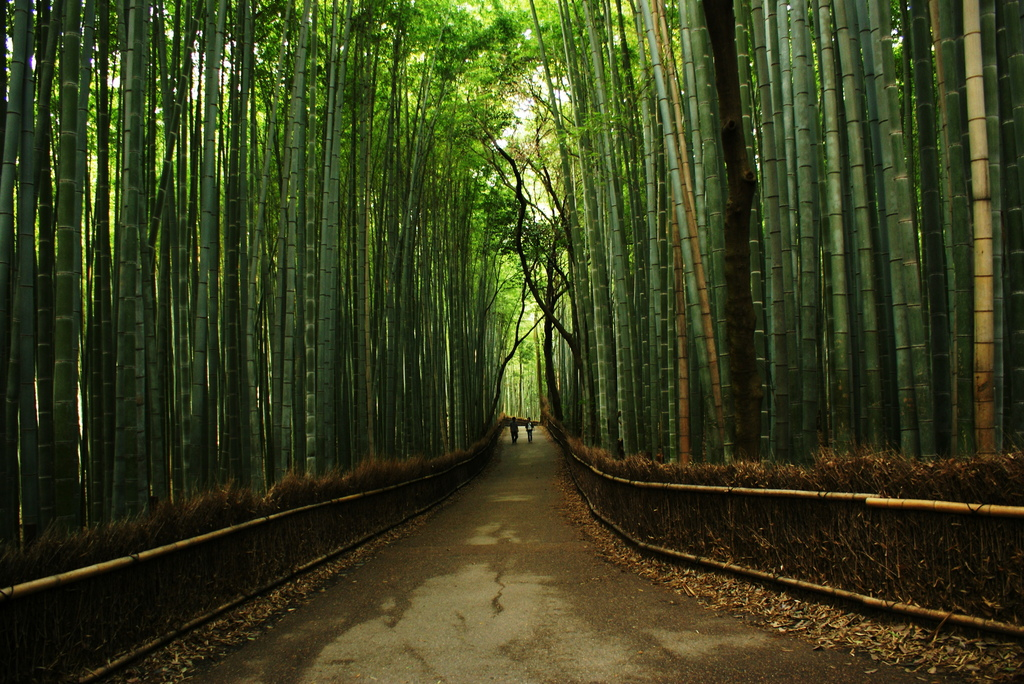 The Prisoners of BAMBOO