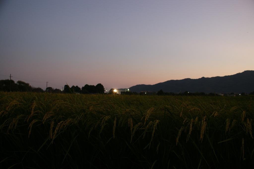 グランドと田園