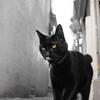 谷中の神猫