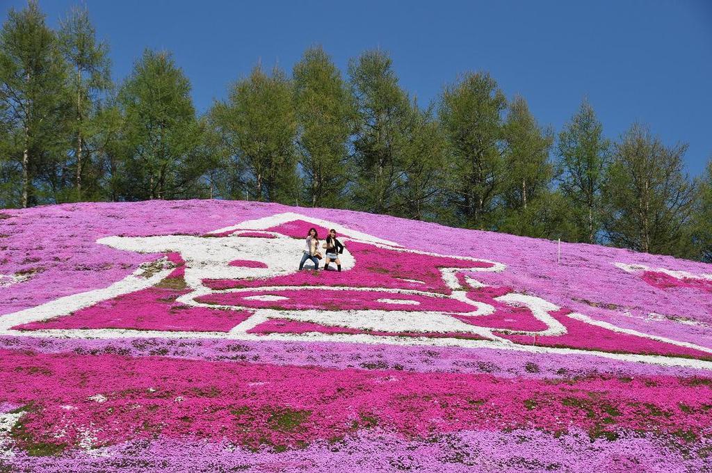東藻琴芝桜公園3