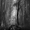 嵐山 竹のトンネル