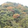 色付く山々