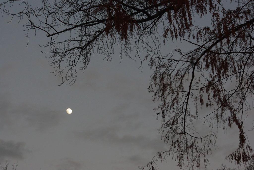 街明かりに浮かぶ月