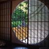 窓越しの庭