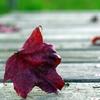 落ち葉の散歩