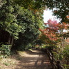 近所の公園散歩道