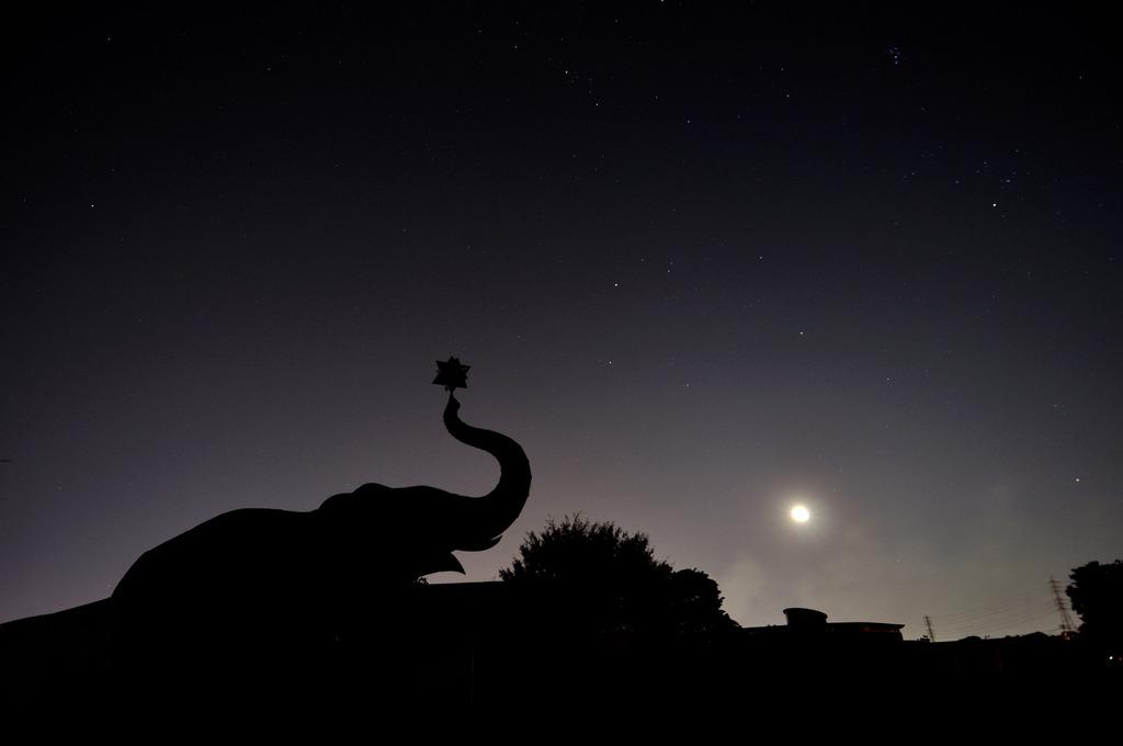 象の像、夜