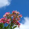 空に向かって咲く