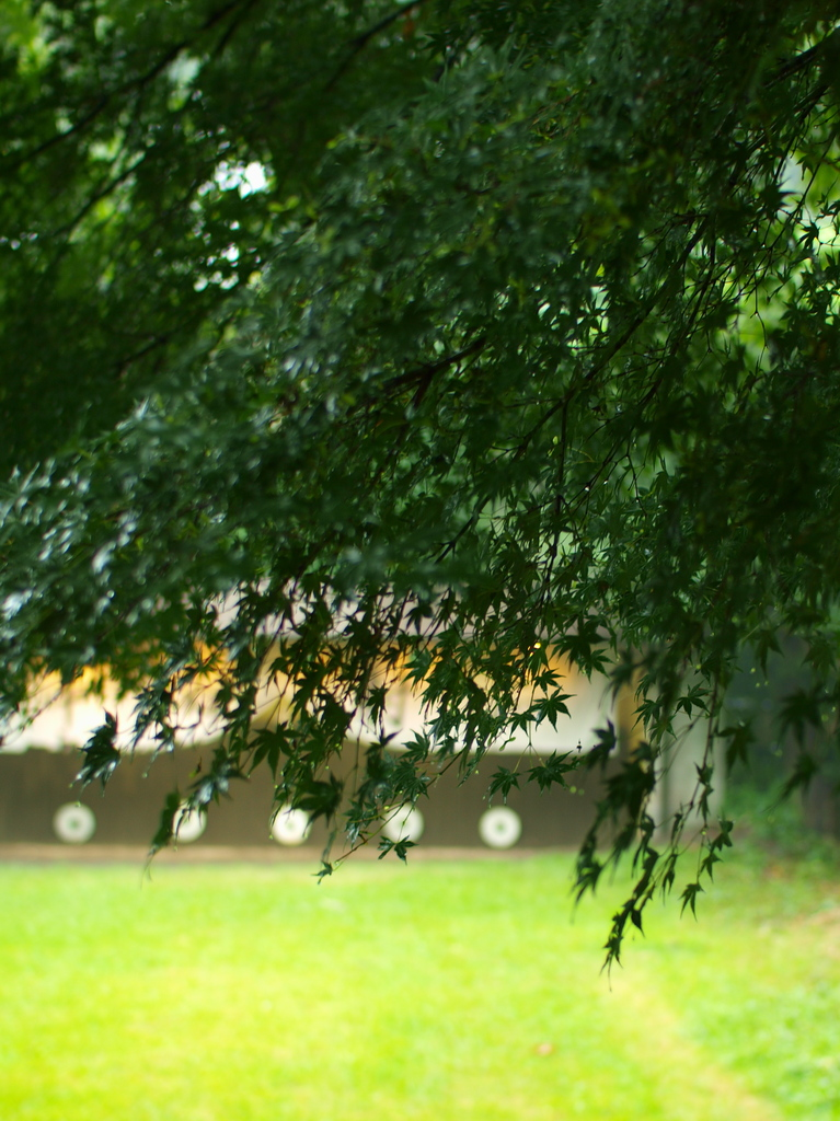とある夏の日の弓道場