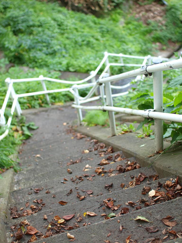 お散歩途中の階段