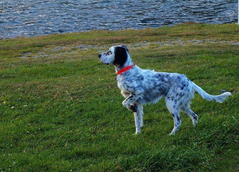 サンモリッツ湖畔の猟犬