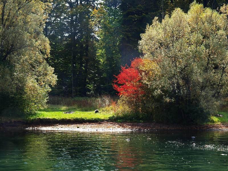 沿岸の紅葉