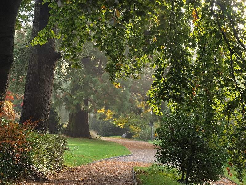 朝の公園(シャウハウゼン)