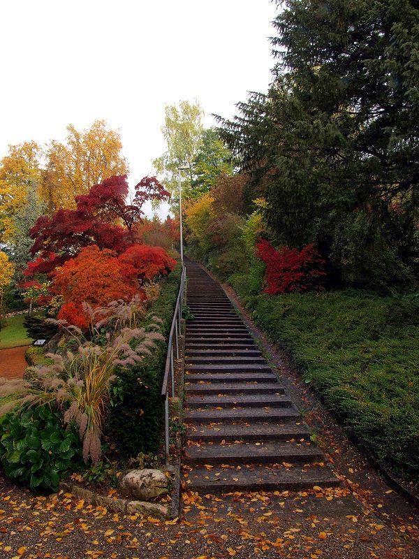 日本庭園(シャウハウゼン)