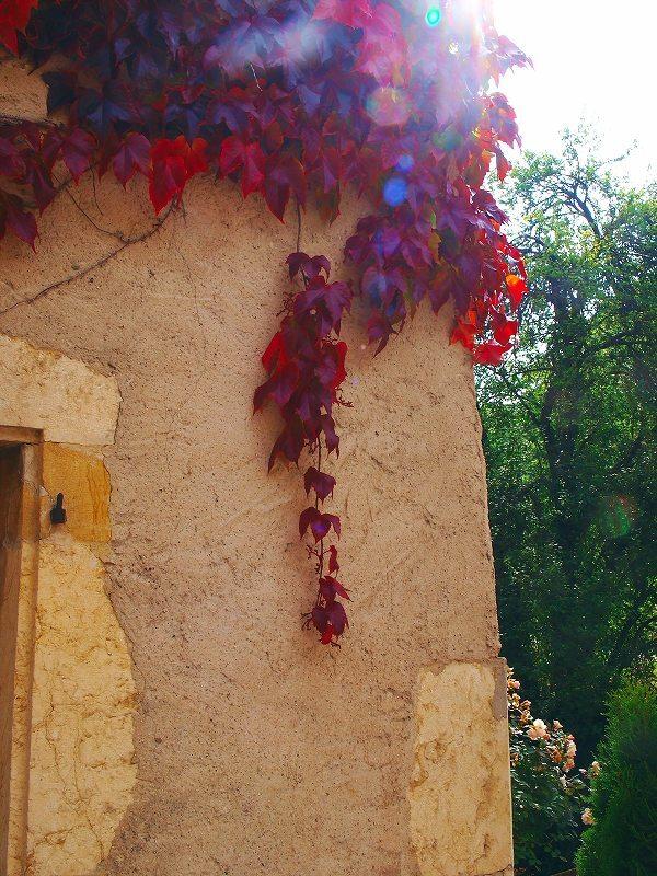 壁を彩る蔦紅葉(ロメンモーティエ)