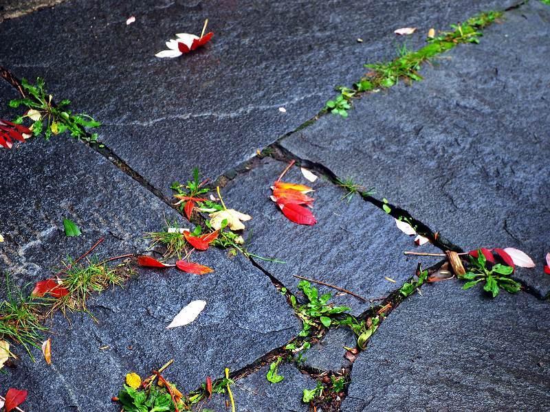 濡れ落ち葉(シャウハウゼン)