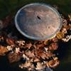 秋の足音(バラ公園の池)