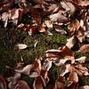 枯れ葉の道