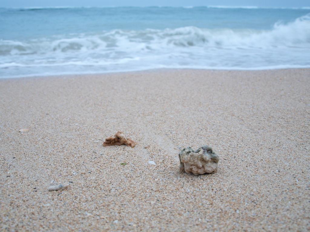 波とたわむれる