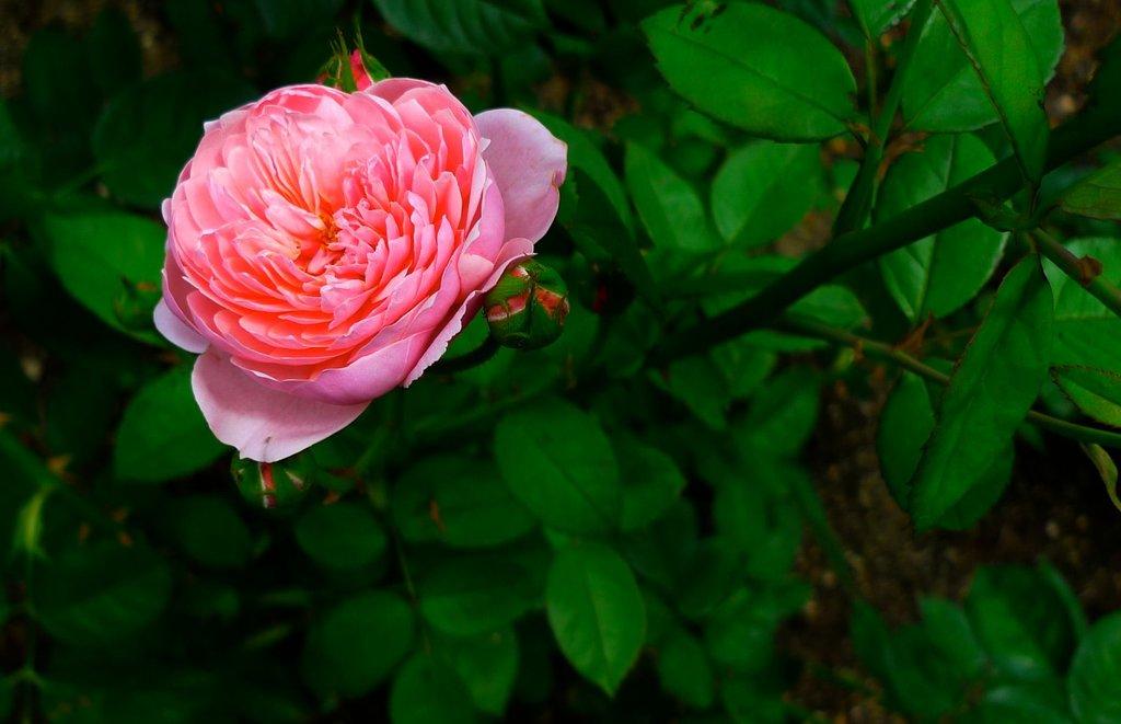 きれいなお花