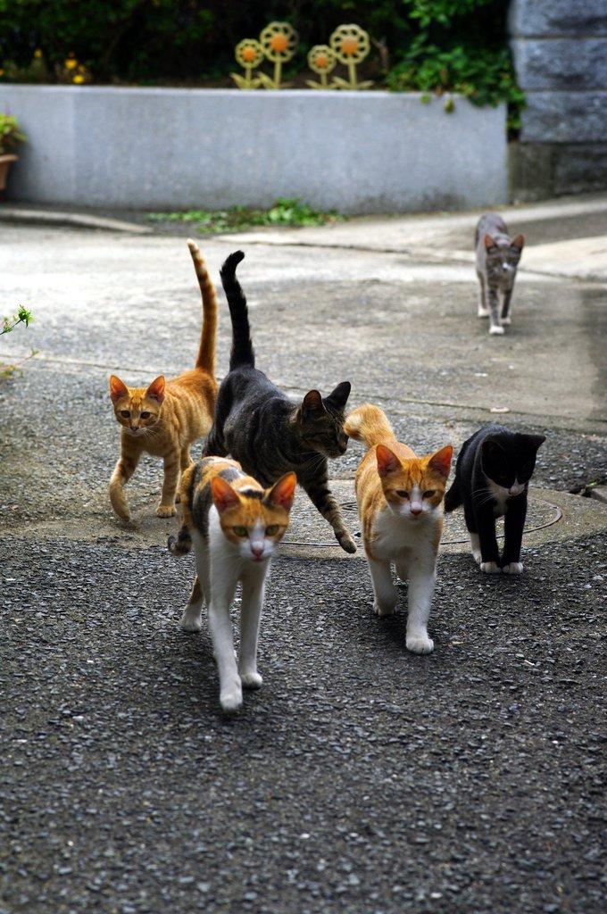 ネコネコ愚連隊