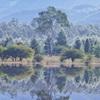 小田代湖と白樺