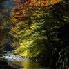 橋の下の紅葉