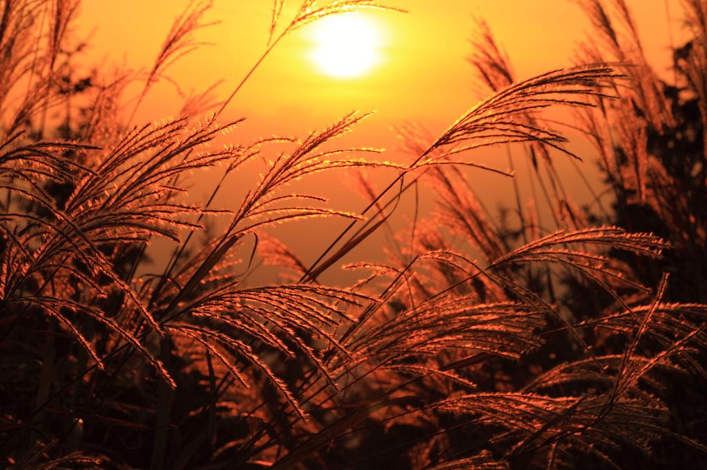きょうの落陽