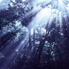 光芒1001-2228d