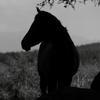 馬 シルエット