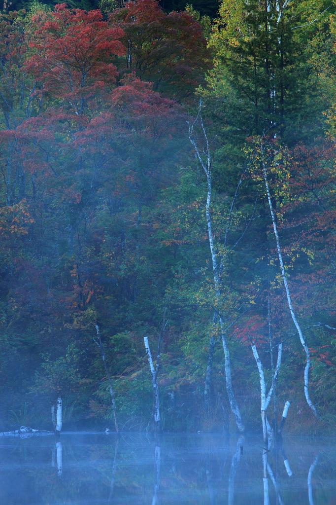 霧と紅葉のイメージ